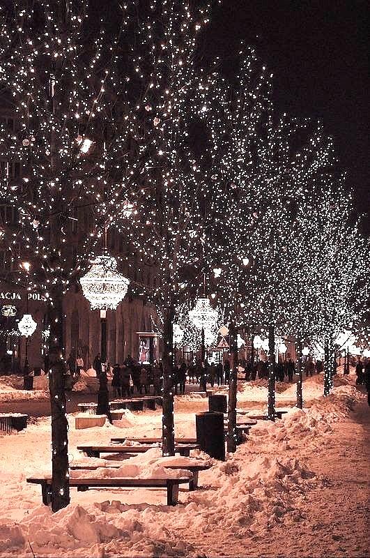 Beautiful light filled trees on Christmas