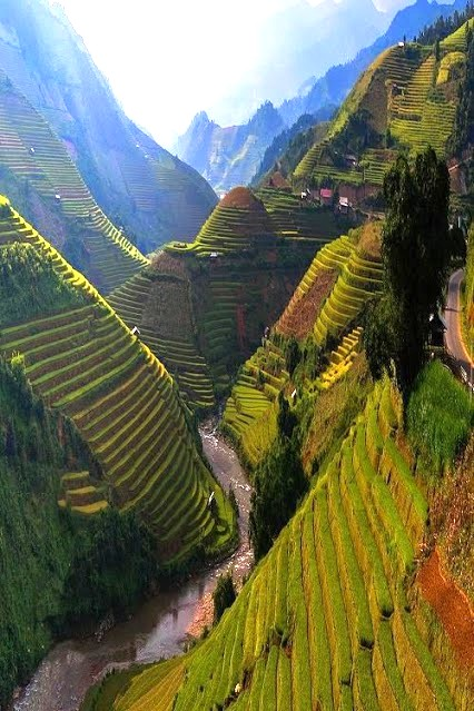 Rice Terrace, Vietnam