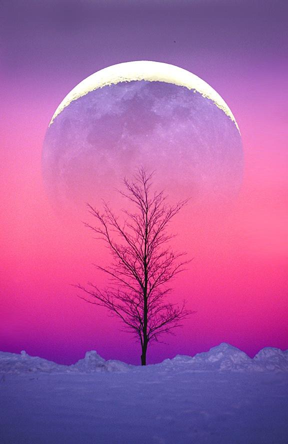 Winter Moonrise