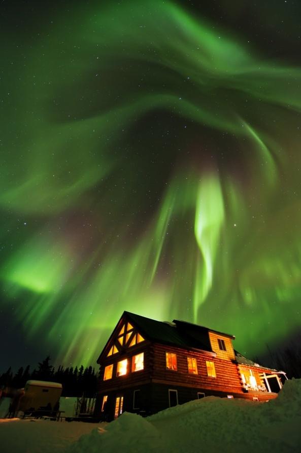 Beautiful Beast Above - Fairbanks, Alaska