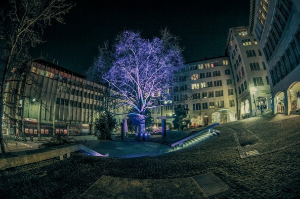 Arbres & Lumières, Geneva
