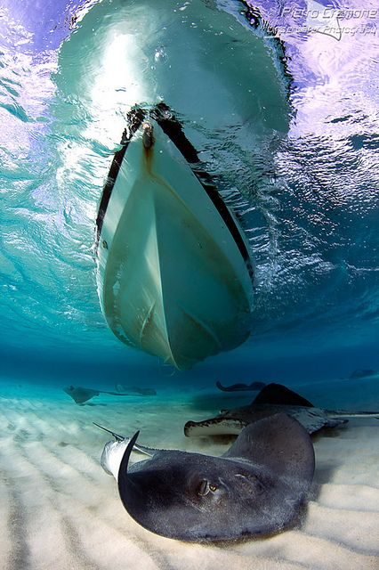 Beneath the belly of the boat