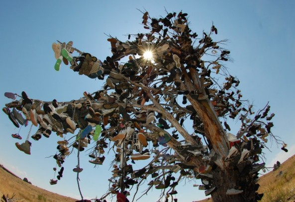 The Route 66 Shoe Tree